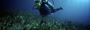 Diving-2.jpg